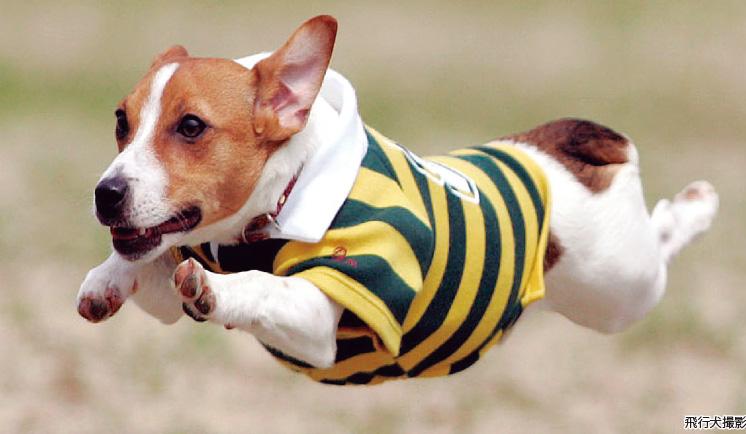 doggy-img01